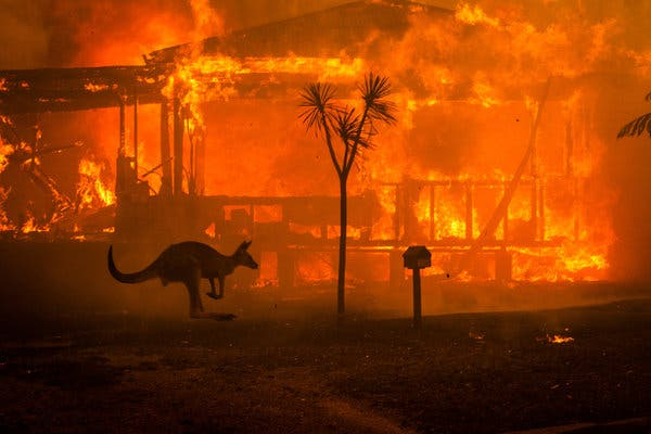 Incendi in Australia.. non piangete!